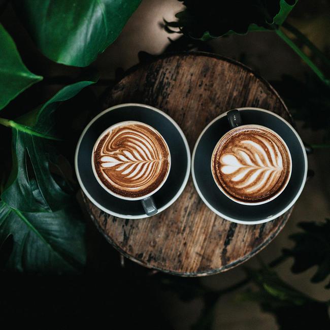 Diferencias entre el café arábica y el robusta